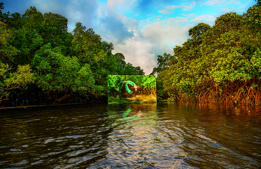 """Mvuvi wa mikoko"" (mangrove kingfisher) is an acrylic painting on gessoed canvas painted by the artist Mantra and installed on a raft secured to the mangroves in Gazi Bay, Kenya, and photographed by Vitale."