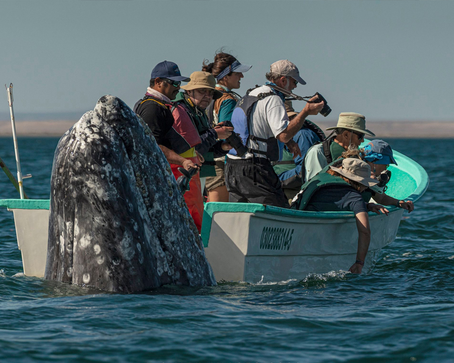 The Story Behind Eric Smith's Surprising Whale Photo