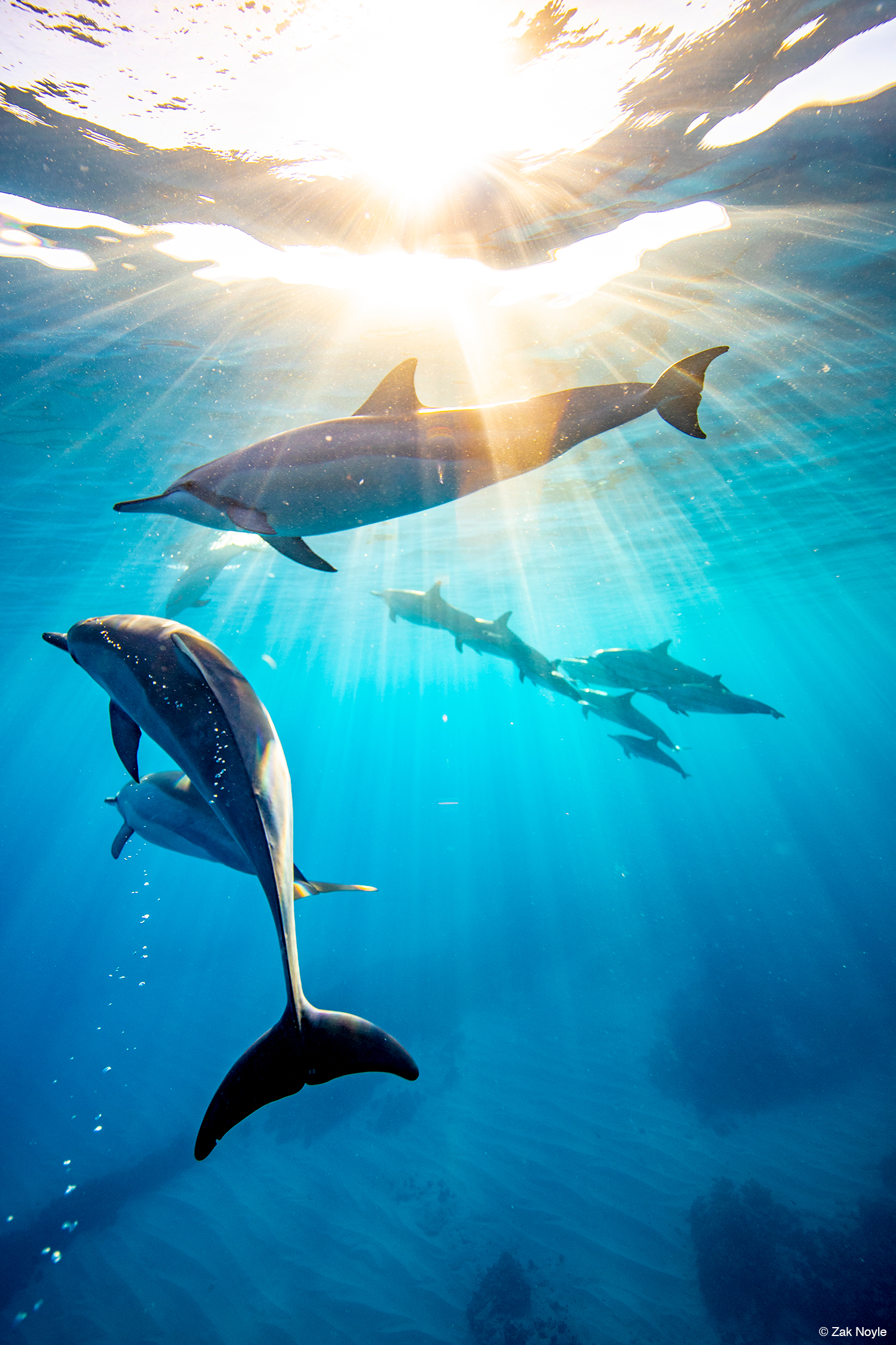 On Assignment: Diving with Dolphins