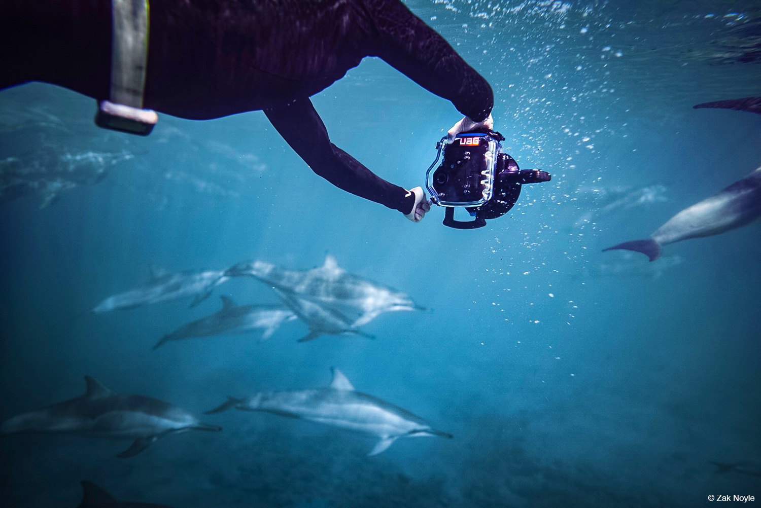 Photo of dolphins by Zak Noyle 2
