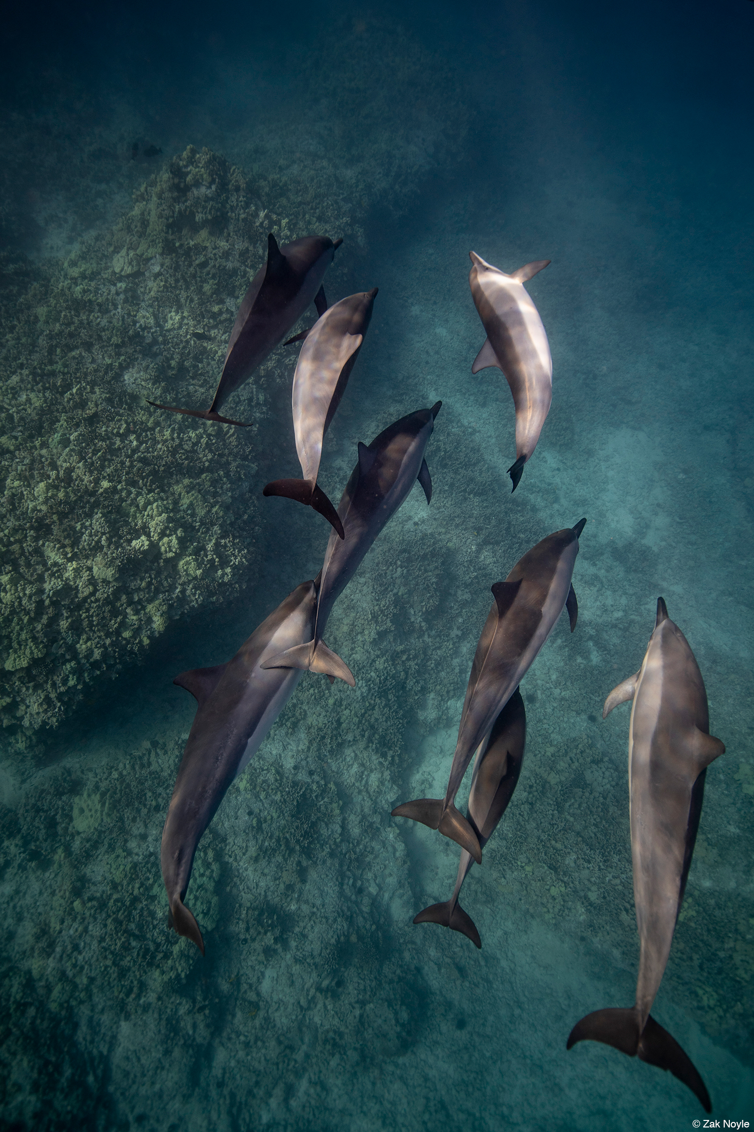 Photo of dolphins by Zak Noyle 3