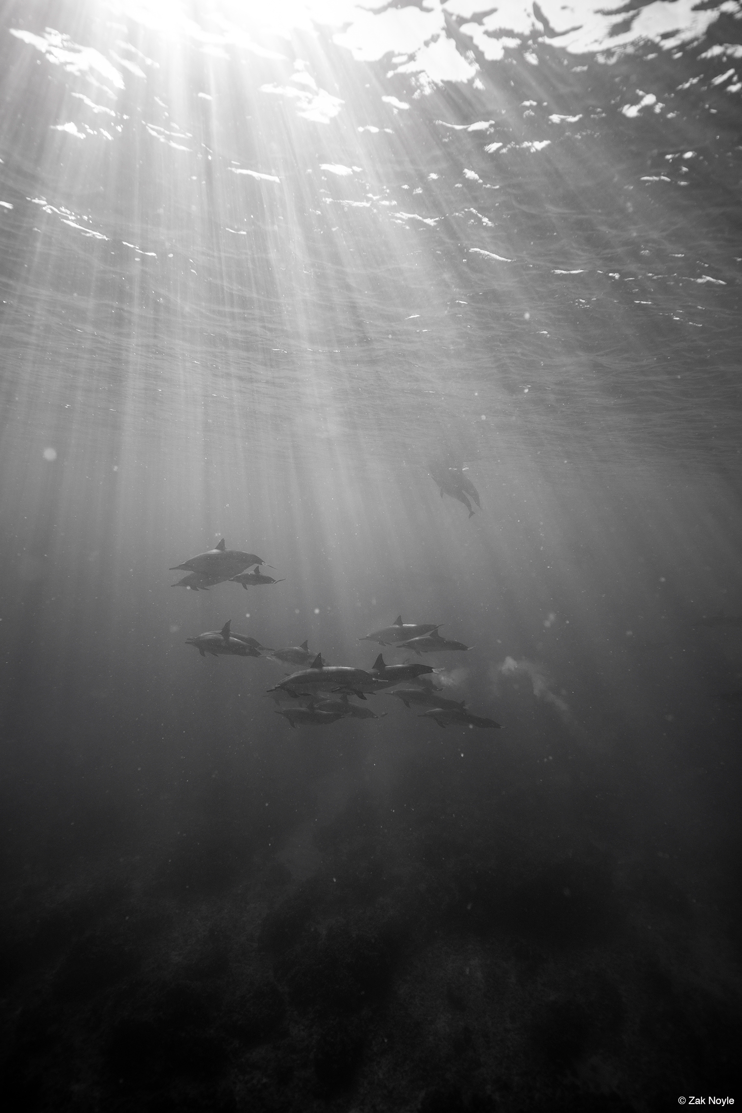 Photo of dolphins by Zak Noyle 7
