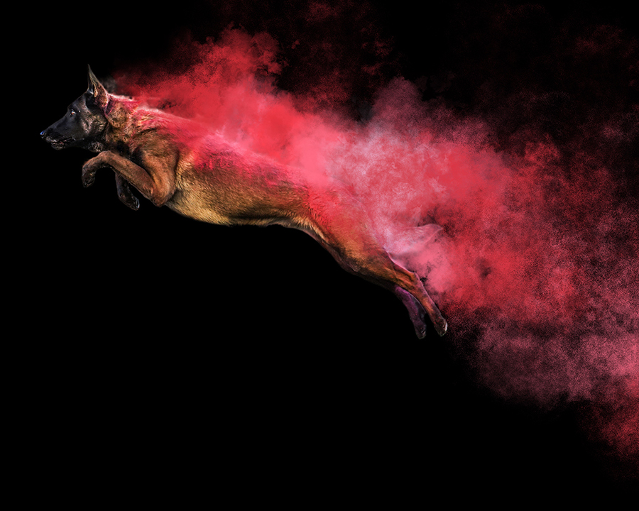 The Story Behind Anabel DFlux's Powdery Pooch Photo