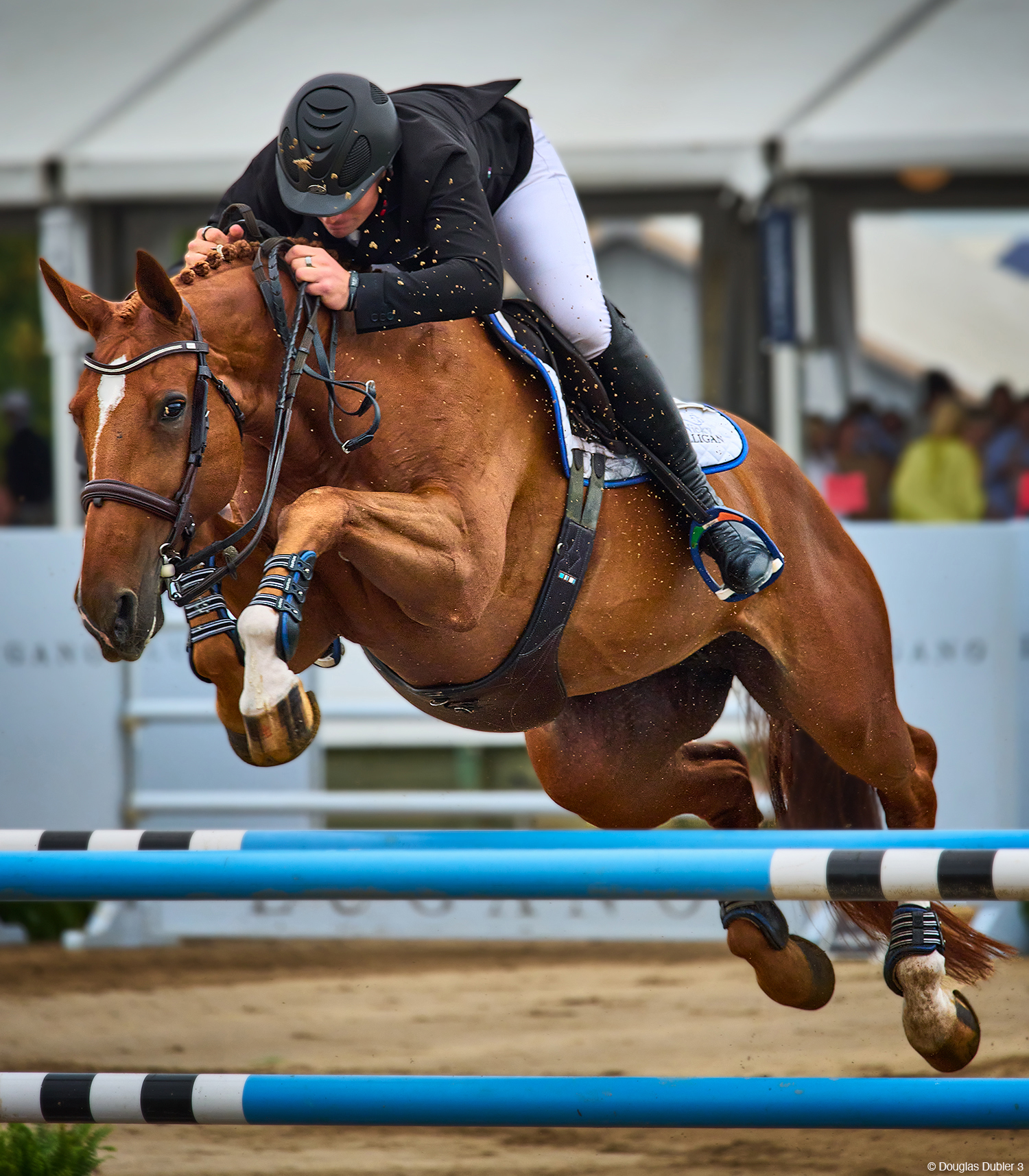 Photo of a jumping horse