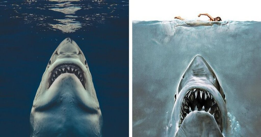Real-Life Jaws? Photographer Captures Iconic Shark Image