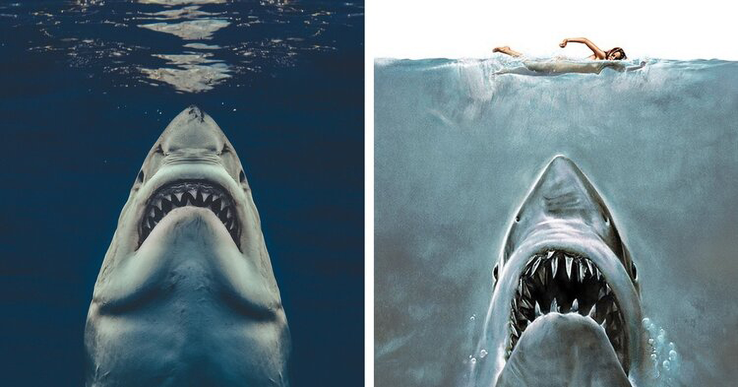 Photo of Great White shark that looks like Jaws