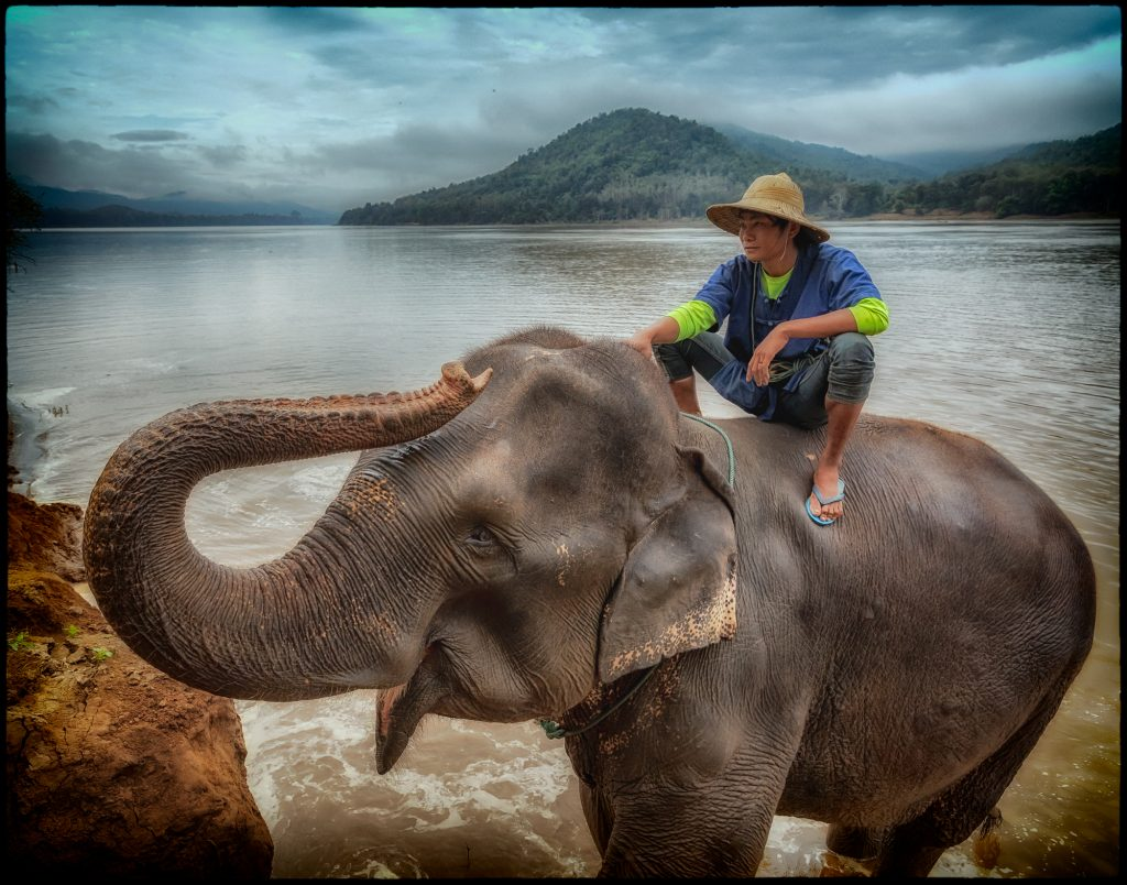 Mahout and Elephant Emerging From Mekong River after Bathing