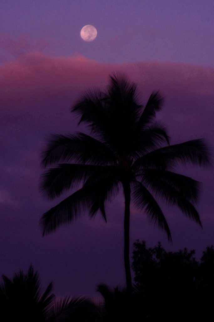 Tropical Moon Over Coconut Palm
